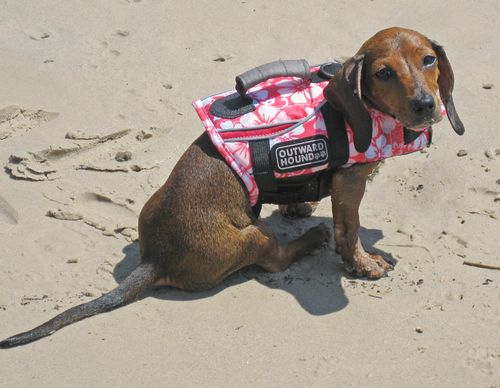 Daisy-lifejacket