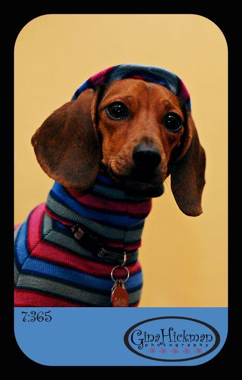 Daisy-sweater