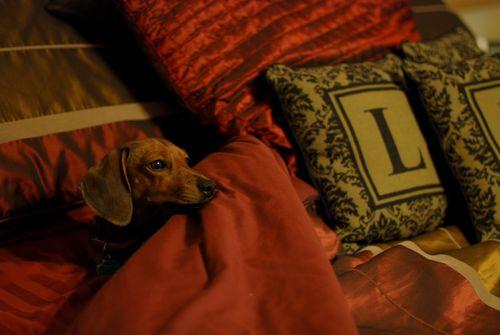 Daisy-bed