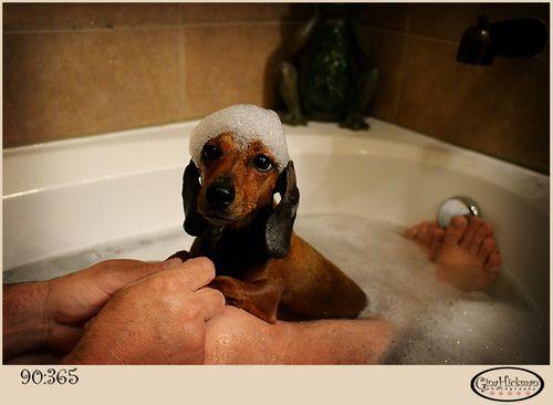 Daisy-bubbles